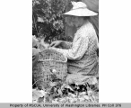 Native American woman picking hops, probably Vashon Island, n.d.