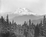 Looking east at Mount Rainier from Vista Peak, August 11, 1896