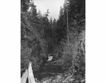 Mashel River Canyon near Eatonville, August 18, 1899