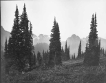 Looking south from Paradise toward the Tatoosh Mountians, August 19, 1895