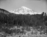 South peak of Mount Rainier from Longmire Springs, July 31, 1895