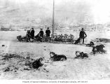 Sleds loaded with caribou horns, with dog sled team in foreground, possibly Circle City, ca. 1899