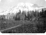 Path through a meadow with Mount Rainier in distance, n.d.
