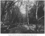 Clearing in woods showing stream, probably Ravenna Park, Seattle, n.d.