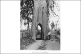 "Arch cut through cedar tree known as the """"Bicycle Tree"""", Snohomish,..."
