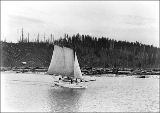 Boat SEA LIGHT under sail, Hoquiam, Washington, ca. 1895.
