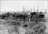 A.W. Bash and daughter Cora Clementine and Clydesdale horses, Bash farm at Oak Harbor, Whidbey...