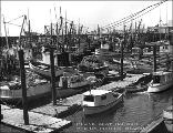 Boat harbor, Blaine, Washington, ca. 1954
