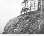 Nesting place of glaucous-winged gulls, June 1907