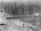 Northern Pacific Railway trestle over gulley in cleared forest, Washington, ca. 1887