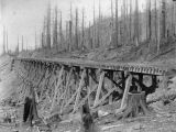 Northern Pacific Railway trestle in cleared forest, Washington, ca. 1887