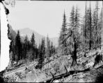 Forest slope and railroad tracks at Monte Cristo, Washington, July 29, 1895