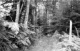 Forest path, Orcas Island, ca. 1910s