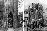 Cedar tree arch; men posed on fir log, Snohomish County, Washington, ca. 1905