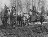 Gilbert Breklhus, Otto Stubb, Mike Prestlien with a team of horses hauling large log, Silvana, ca....