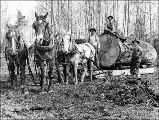 Gilbert Breklhus, Otto Stubb, and Mike Prestlien hauling logs with a team of horses, Silvana,...