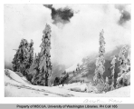 Snow-covered trees at Austin Pass, n.d.
