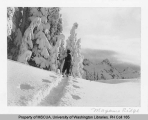 Skier on Mazama Ridge, southeast slope of Mt. Rainier, n.d.
