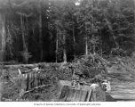 Men resting on tree stumps during construction of railroad from Rockport to Newhalem, August 12,...