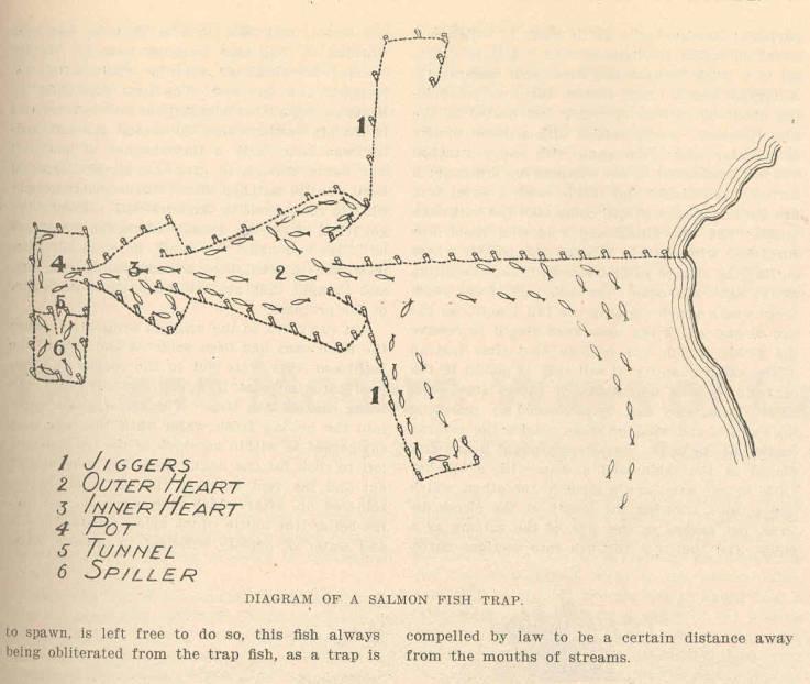 diagram of a salmon fish trap