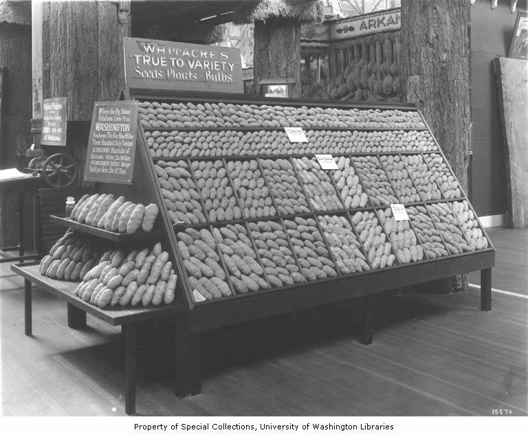 Display of Washington potatoes in the Palace of Agriculture